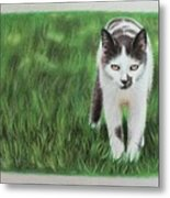 Kitty Grass Metal Print