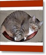 Kitty In A Bowl Metal Print