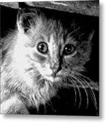 Kitty In Black White Metal Print
