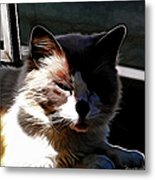 Kitty In The Shadow Metal Print