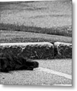 Kitty In The Street Black And White Metal Print