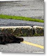 Kitty In The Street Metal Print