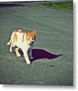 Kitty On The Prowl Metal Print