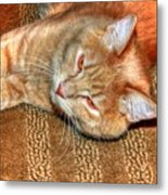 Kitty Relaxing Metal Print