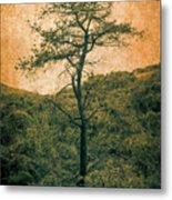 Knarly Tree Metal Print