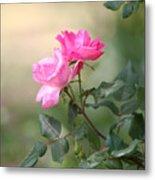 Knock Out Rose Metal Print