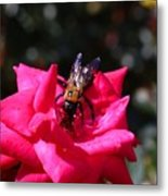 Knockout Rose And Bumblebee Metal Print