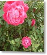 Knockout Roses Metal Print