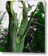 Knotty Tree Metal Print