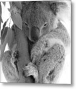 Koala Bear Metal Print by Terry Burgess