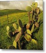 Kohala Cactus Metal Print