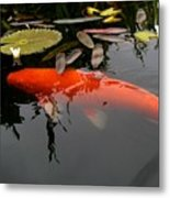 Koi Fish 4 Metal Print