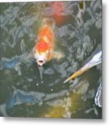 Koi And Great Blue Heron Metal Print