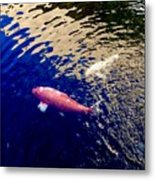 Koi On Blue And Gold Metal Print