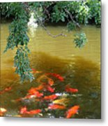 Koi Party Metal Print