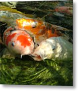 Koi Ripples Metal Print