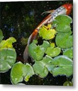 Koi With Lily Pads A Metal Print