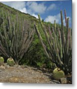 Koko Crater Cacti Metal Print