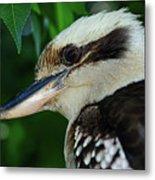 Kookaburra Portrait By Kaye Menner Metal Print