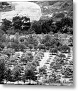 Kourion Farm Metal Print