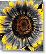 Krypton's Sun Flower Bwy Metal Print