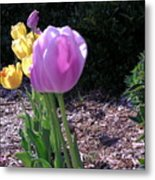 Kv Tulips Metal Print