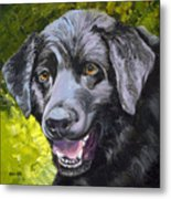 Lab Out Of The Pond Metal Print
