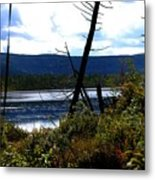 Labrador Pond Metal Print