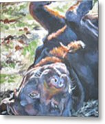 Labrador Retriever Chocolate Fun Metal Print