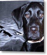 Labrador Retriever Thoughts  Metal Print