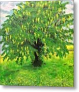 Laburnum Tree In Splendid Isolation Metal Print