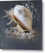 Lace Murex Sea Shell In Blue 2 Metal Print