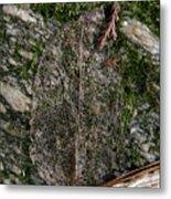 Lacey Leaf Metal Print