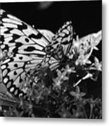Lacy Black And White Metal Print