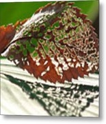 Lacy Leaf Metal Print
