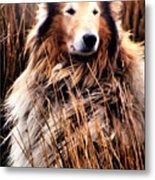 Laddie In Charge Metal Print