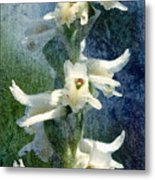 Ladies-tresses Orchid Metal Print
