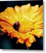 Lady Bug Walking The Line Metal Print