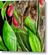 Lady Slippers Metal Print
