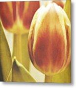 Lady Tulip Metal Print