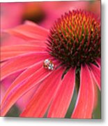 Ladybird And Echinacea Metal Print