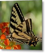 Ladybug And Tigertail Metal Print