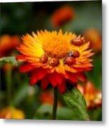 Ladybug Gathering Metal Print