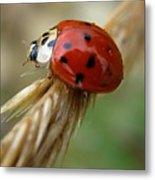 Ladybug I Metal Print