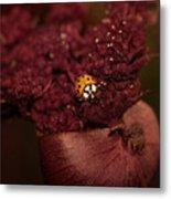 Ladybug In Chocolate Metal Print