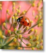 Ladybug On Fennel Metal Print