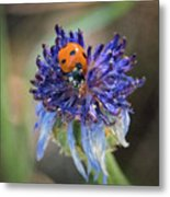 Ladybug On Purple Flower Metal Print