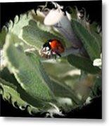 Ladybug On Sage With Swirly Framing Metal Print