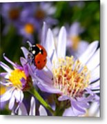 Ladybug Shows Her Heart Metal Print