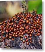 Ladybugs On Branch Metal Print by Garry Gay